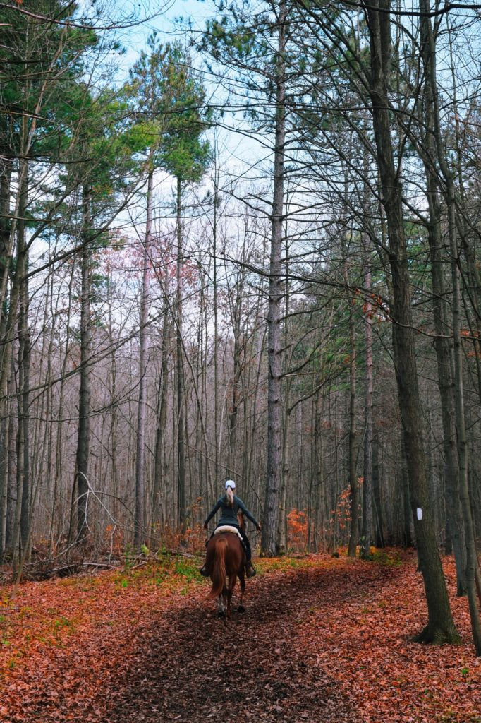 Woman riding a horse in an autumn forest Outdoor recreation